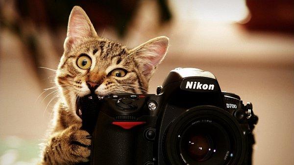 Виды фотосессий